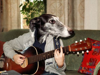 normal_guitar-dog