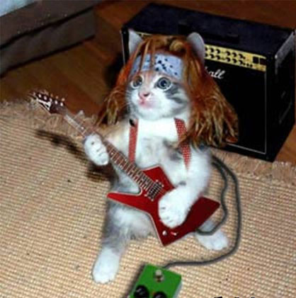 cat_guitar